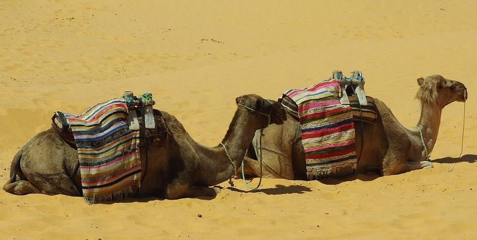 Tunisie-dernière minute