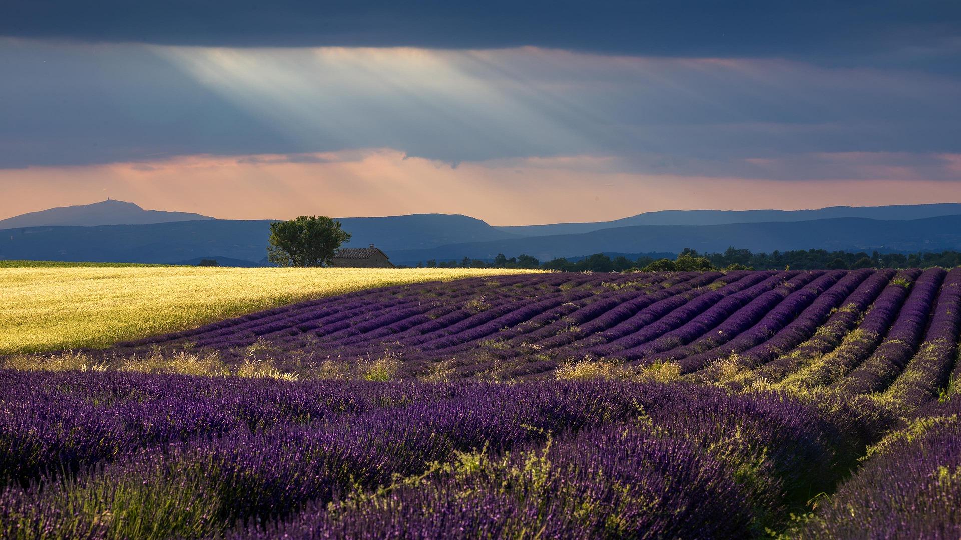 Provence-France-dernière minute